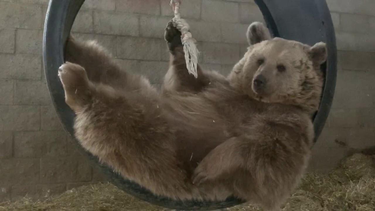Amy in the swing in the bears inside den area. She is so zen.