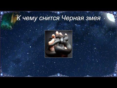 К чему снится Черная змея (Сонник)