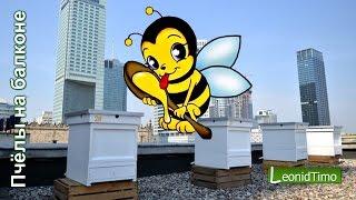 Как я пчел в Киеве на балконе разводил