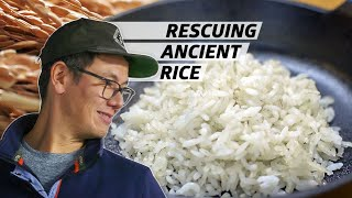 How Anson Mills Saved Ancient Grains of Rice From Extinction — Rooted