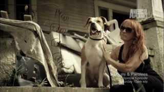 Pit Bulls & Parolees   You Watch. We Give. This Saturday at 10PM E/P