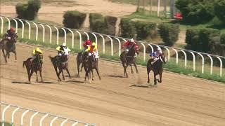 Vidéo de la course PMU PREMIO IL MORO