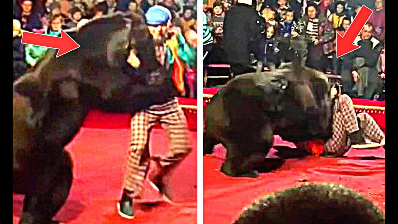 बीच सर्कस में हुए ऐसे भयानक हादसे जो आपके होश उड़ा देंगे ? Scary Moments in the circus