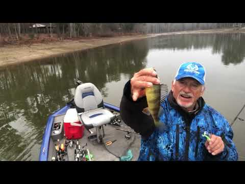 Yellow Perch And White Perch Fishing On Lake Murray