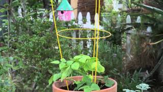How To Make A Tomato Cage Into A Pot Trellis : Garden Space