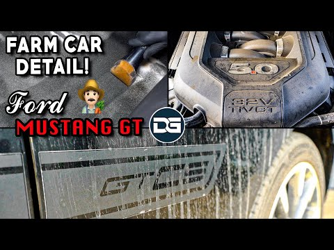Deep Cleaning a DIRTY Ford Mustang GT…Farm Car?! | INSANE Detailing Transformation!