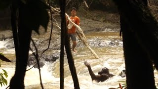 Amazing Moment Orangutan Is Rescued From River