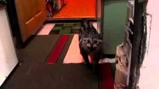 Зверская жизнь.О чем говорят кошки