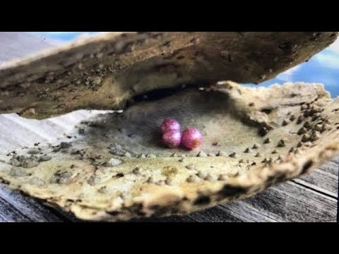 Thumbnail: REAL BRIGHT PINK PEARL DISCOVERY ON FUN HOUSE TV