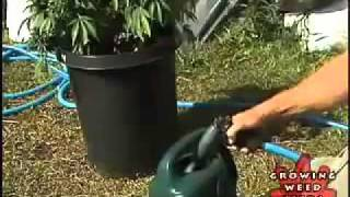 How To Grow Weed Plant Outdoors
