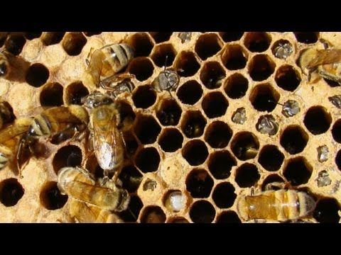 Earth Focus Episode 44 - Killing Bees: Are Government and Industry Responsible?