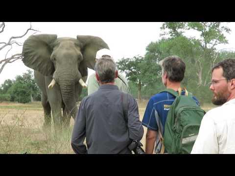 "ZAMBEZI 2017 Mana Pools NP with Stretch Ferreira (Goliath Safaris) / Elephant Bull ""Donald"""