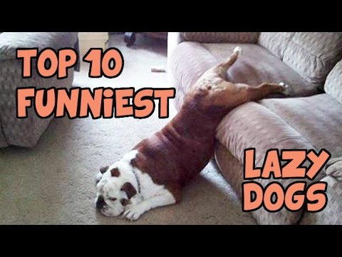 TOP 10 OF THE LAZIEST DOGS OF ALL TIME