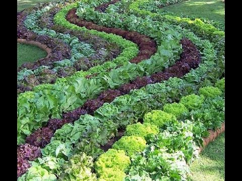 Огород на даче  Дизайн огорода