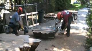 Cutting Open A 5,000 Year Old Bog Oak Tree