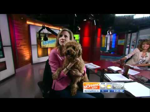 Interview with Storm the Weather Dog