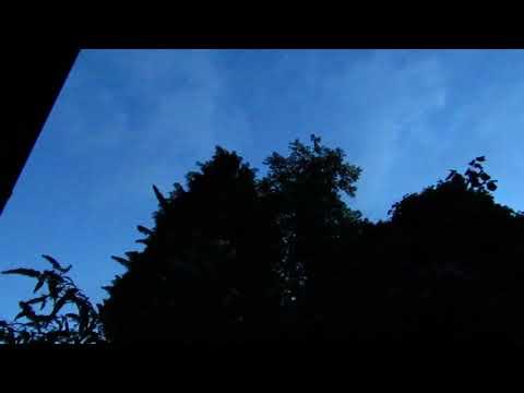 MVI 7043 Juvenile Blackbird practising his song at dawn 15/8/17