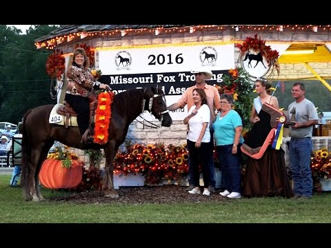 "Missouri Fox Totter Mare from Miller-Ranch ""All In M.R. "" in Ava 2016"