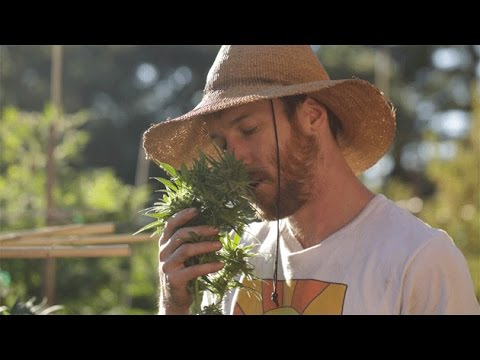 Welcoming Casey O'Neill, CGA Mendo Chair & Happy Day Farms, Ep. 51 : Smokin' With Swami Select