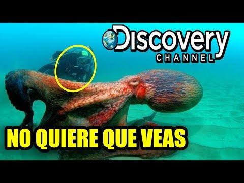 El video que Discovery Channel No quiere que veas