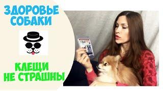 видео Капли от блох для собак