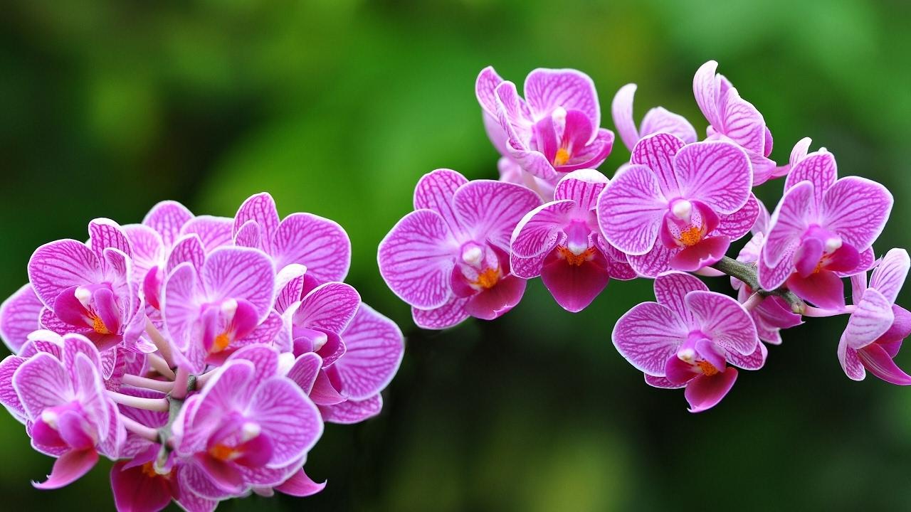 Evde bir orkideyi yetiştirme
