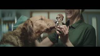 Друзья! Не бойтесь взять собаку из приюта  ДВОРЯНЕ не хуже породистых собак