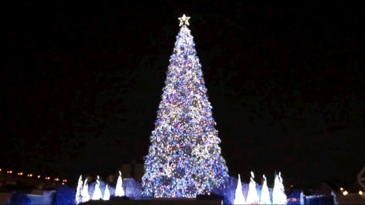 World's Best Christmas Tree Listed In The Guiness Book Of