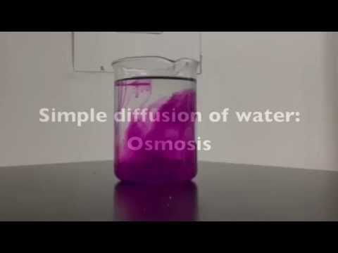 1.4 Simple diffusion, Facilitated Diffusion, Osmosis and Active Transport