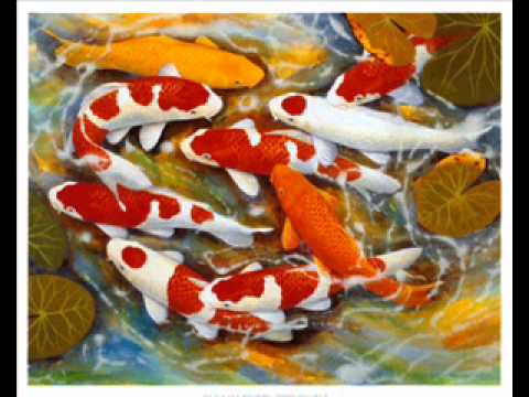 Koi Fish Drawings And Paintings Slideshow