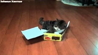 Коты ЛЮБЯТ коробки!!!:)
