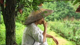 【伍阿哥】山上的梨子熟了,個頭大水分足,一會拿幾個回去和奶奶分享!
