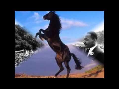 Freedom For The Stallion Three Dog Night