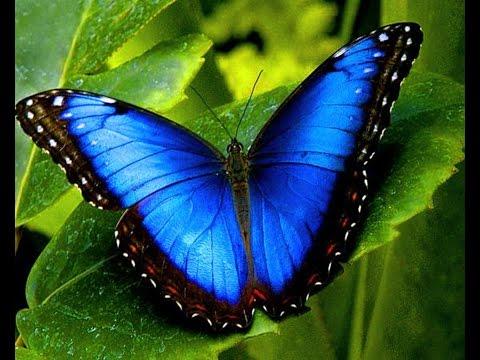 World's Most Beautiful Butterflies - Best documentaries