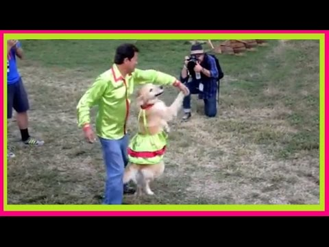 Funny DOGS love to DANCE to Music! Best Dancing Dog Compilation EVER