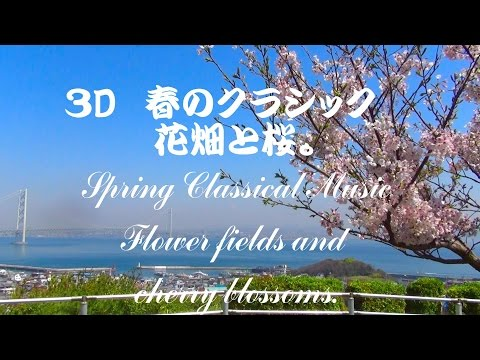 Relax 春のクラシック!淡路洲本城、菜の花畑classical music. Rape flowers and cherry blossoms.