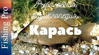Рибальська енциклопедія. Карась