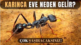 Evde Karınca Olmasının Sebebini Duyunca Çok Şaşıracaksınız!
