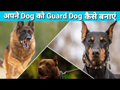how to train a dog to guard your home / Apne dog ko guard kese banaye / Guard Dog trening