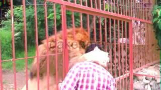 животные любят людей \ VINE