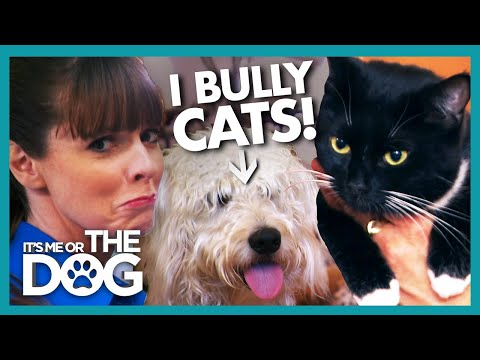 Victoria Stunned as Dog Bullies Owner and Her Cat | It's Me or the Dog