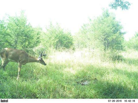How To Hunt Early Season Bucks...
