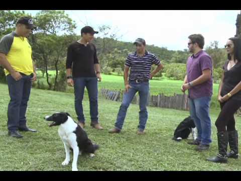 Reabilitador de Cães treina o  Border Collie Ozzy 12