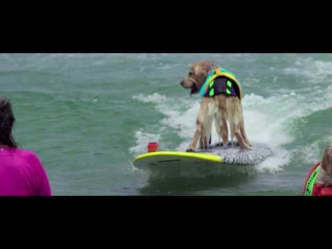 Unleashed by Petco Imperial Beach Surf Dog Competition Highlights