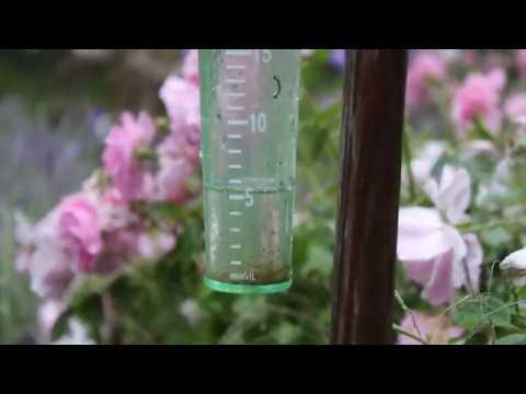 Regen 5 juni