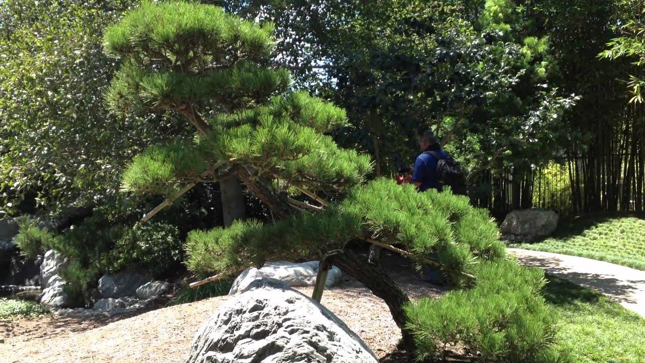 Image gallery japanese garden trees for Japanese garden trees