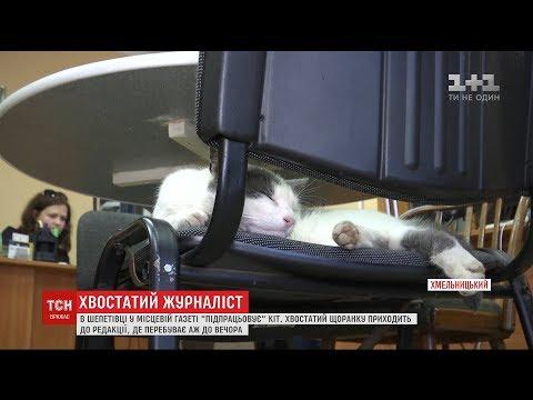"""У Шепетівці кіт """"підпрацьовує"""" у місцевій газеті"""