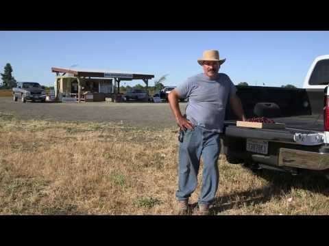 Shell Rotella Unsung - A life in the day of hard work: Farming
