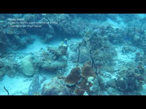 Diseased Corals On Flat Cay Reef, St. Thomas, US Virgin Islands