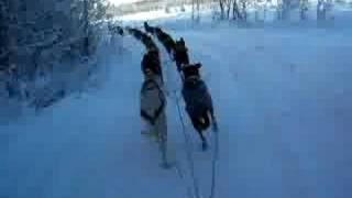 18 Sled Dogs- Over 20 Mph!!!